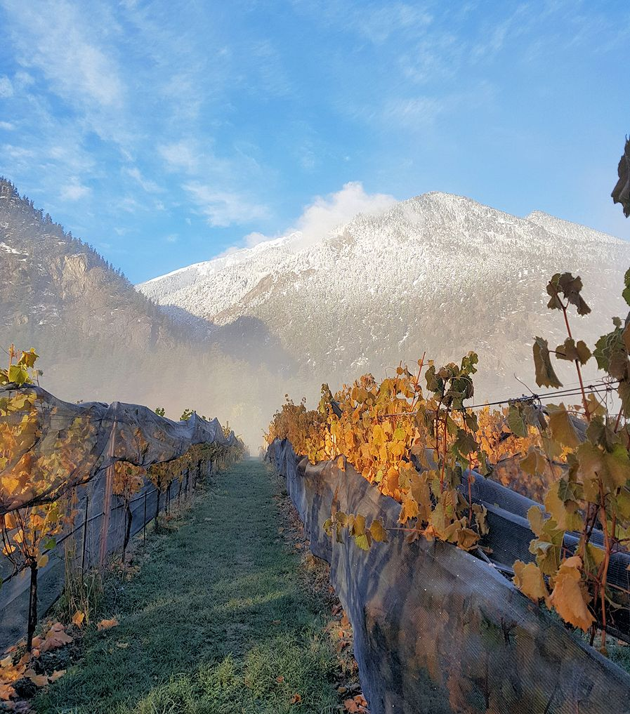 Cliff and Gorge Vineyards and Winery ~ Lillooet BC