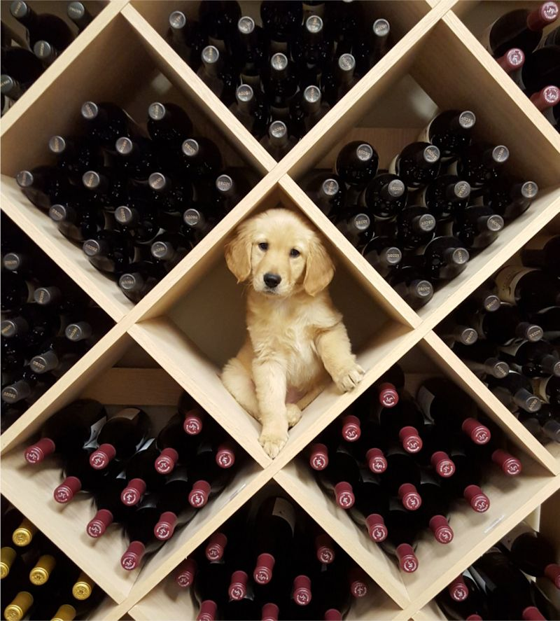 pup and wine
